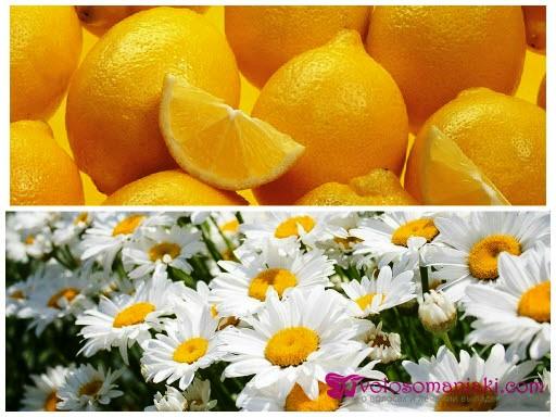 Осветление волос ромашкой и лимоном