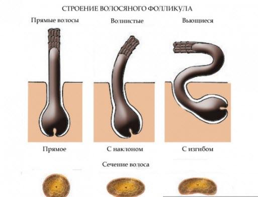 Как определить тип волос и кожи головы