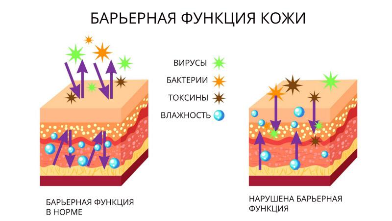 Вред от частого мытья лица